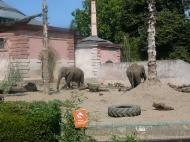 zoo15-3